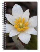 Bloodroot Beauty Spiral Notebook