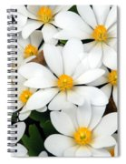 Bloodroot Blooms Spiral Notebook