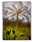 Bloodroot Spiral Notebook