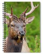 Bloody Elk Spiral Notebook