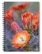 Bloom In Orange Spiral Notebook