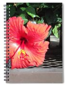 Bloom Where Planted Spiral Notebook