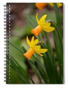 Blooming Daffodils Spiral Notebook