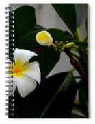 Blooming Frangipani Flower Alongside Bud Spiral Notebook