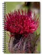 Blooming Spear Thistle Spiral Notebook