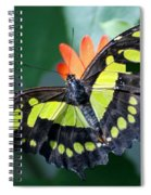 Blooms And Butterfly5c Spiral Notebook