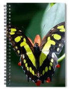Blooms And Butterfly6c Spiral Notebook