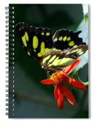 Blooms And Butterfly7c Spiral Notebook