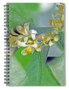 Blooms Of Lemon Tree Spiral Notebook
