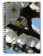 Blossoms 4 Spiral Notebook