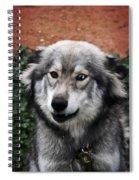 Blue And Brown Eyed Husky Spiral Notebook
