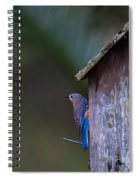 Blue And Rose Beige Plumage Spiral Notebook
