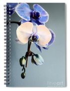 Blue And White Orchids Spiral Notebook