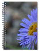 Blue Aster Spiral Notebook