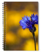Blue Bachelor Button On Gold Spiral Notebook