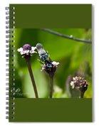 Blue Bee 2 Spiral Notebook