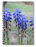 Blue Bells 1 Spiral Notebook