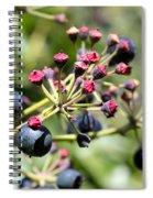 Blue Berry Spiral Notebook