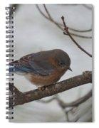 Blue Bird 201301 Spiral Notebook