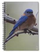 Blue Bird Of Happiness Spiral Notebook