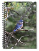 Blue Bird Perched Spiral Notebook