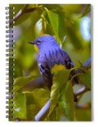 Blue Bird With A Yellow Throat Spiral Notebook