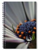 Blue Center Spiral Notebook