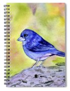 Blue Chaffinch Spiral Notebook