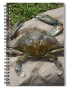 Blue Crab On The Rock Spiral Notebook