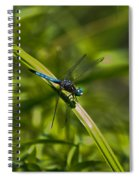Blue Damsel Dragon Fly Spiral Notebook