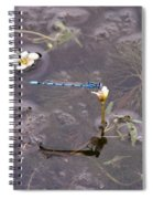 Blue Damselfly Spiral Notebook