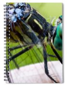 Blue Dasher Spiral Notebook
