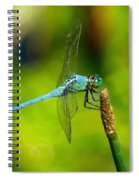 Blue Dragonfly 2 Spiral Notebook
