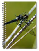 Blue Dragonfly 3 Spiral Notebook