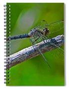 Blue Dragonfly 5 Spiral Notebook