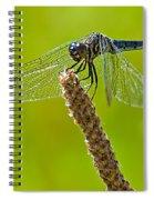 Blue Dragonfly 6 Spiral Notebook