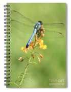 Blue Dragonfly On Yellow Flower Spiral Notebook