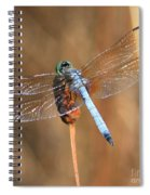 Blue Dragonfly Square Spiral Notebook