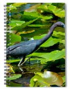 Reddish Egret Among The Lily Pads Spiral Notebook