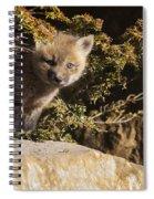 Blue Eyes Baby Fox Spiral Notebook