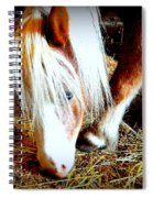 Blue-eyes Mini Spiral Notebook
