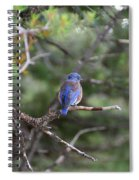 Blue Feathers Spiral Notebook