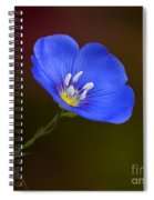 Blue Flax Blossom Spiral Notebook