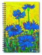 Blue Flowers - Wild Cornflowers In Sunlight  Spiral Notebook