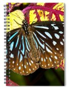 Blue Glassy Tiger Butterfly Spiral Notebook