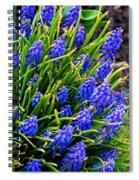 Blue Grape Hyacinth Spiral Notebook