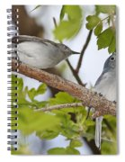 Blue-gray Gnatcatcher Spiral Notebook