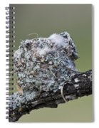 Blue-gray Gnatcatcher Nest Spiral Notebook
