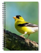 Blue Heart Goldfinch Spiral Notebook