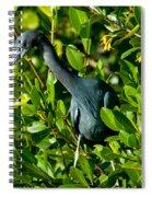 Blue Heron In Mangroves Spiral Notebook
